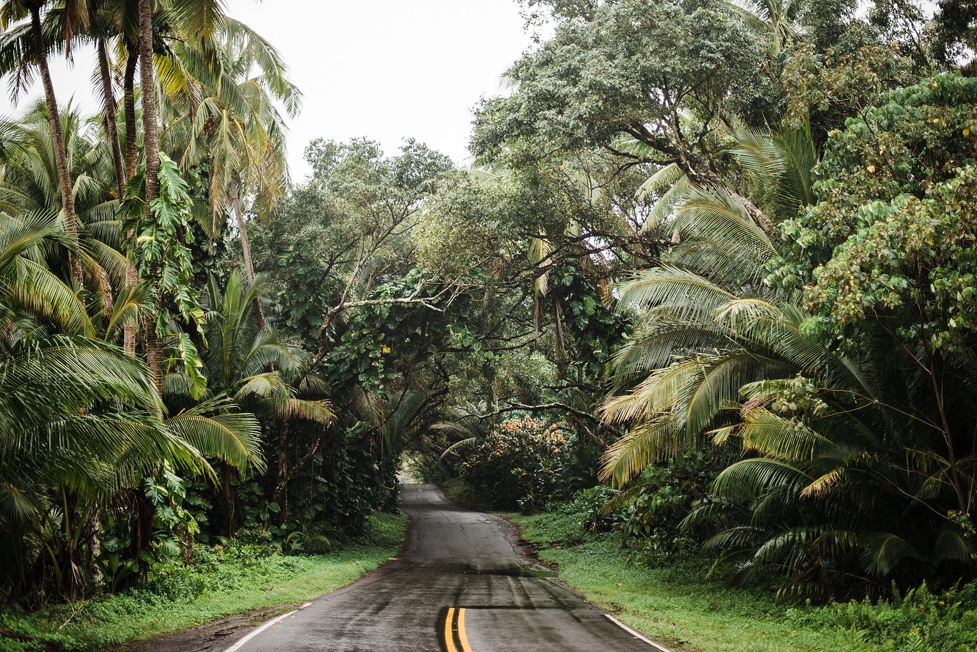 Photo of Highway 137 going through the Malama-Ki Forest Preserve on the Big Island of Hawaii by Laura Lango of Forthright Photo