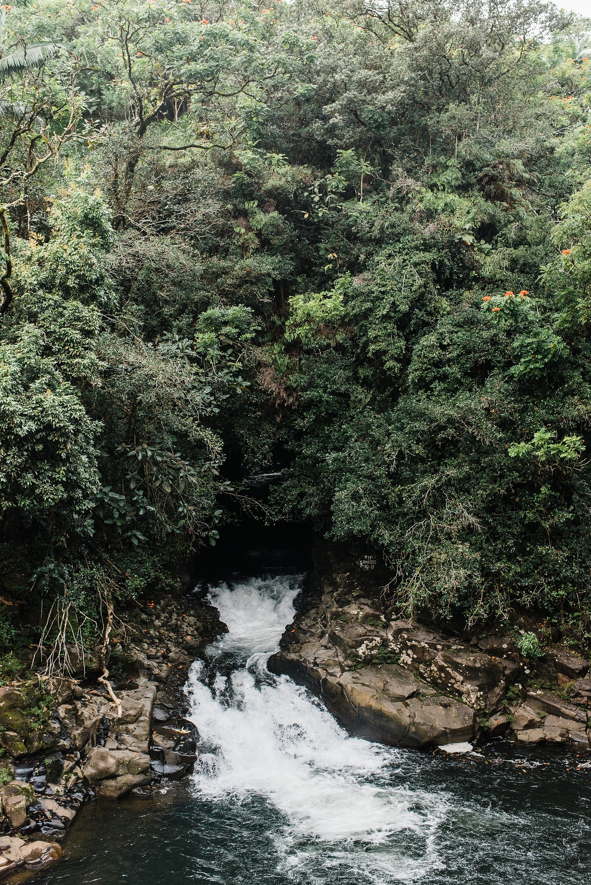 Photo of Kawainui Stream crossing under Old Mamalahoa Highway on the Big Island of Hawaii, taken by Laura Lango of Forthright Photo