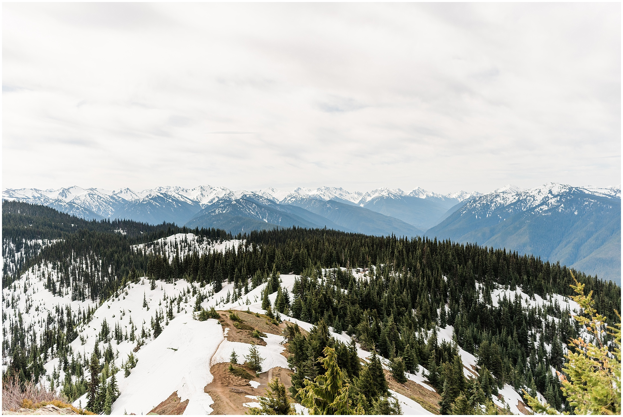 Photo of Hurricane Ridge via the Hurricane Hill Trail in Olympic National Park by Forthright Photo