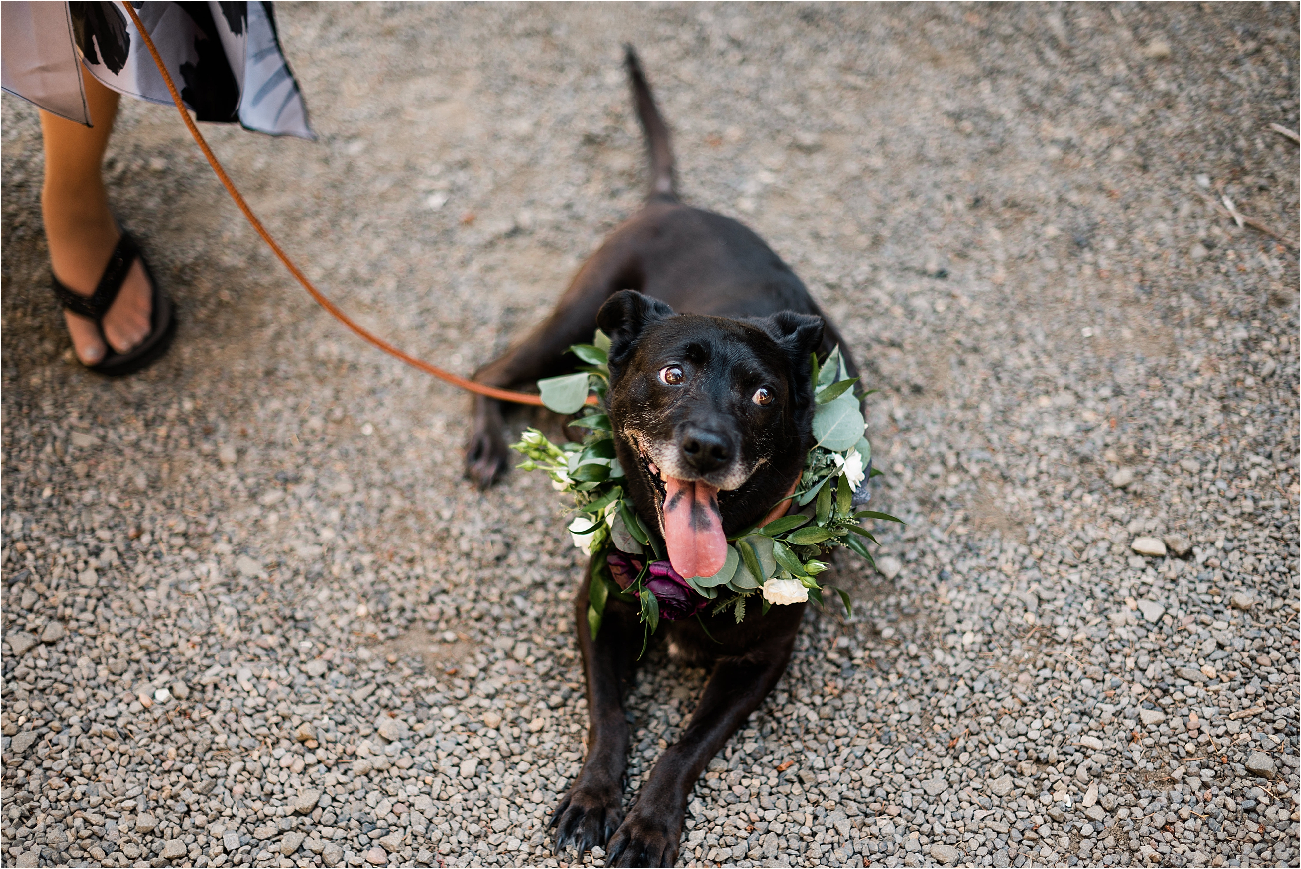 Stella, the flower dog at Cassy & Viva's bohemian Oregon destination wedding at Camp Lane. Image by Forthright Photo.